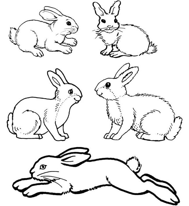 pin rabbits coloring pages