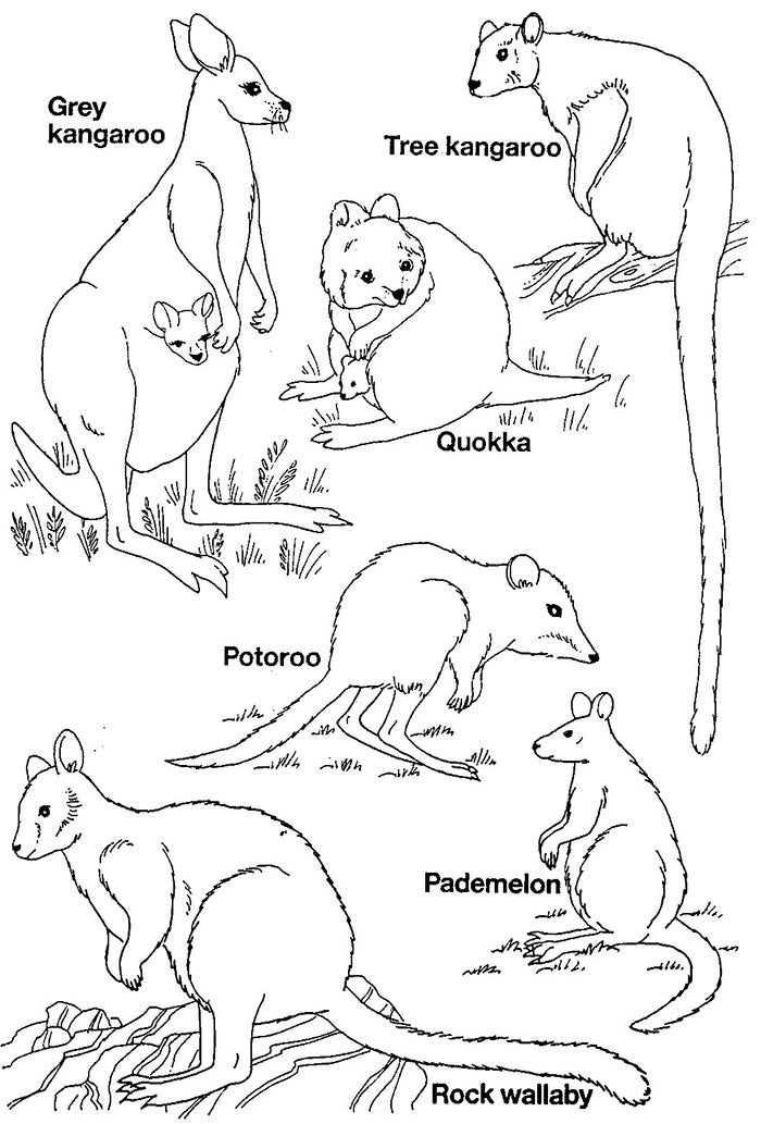 Australian animal template animal templates free for Animal coloring pages printable free