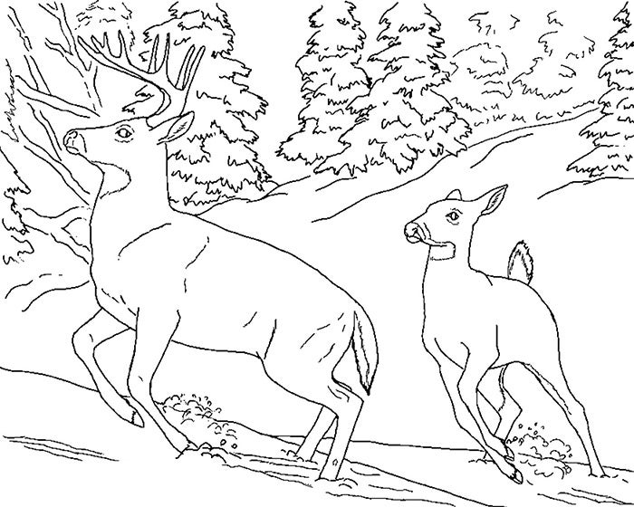 printable deer template