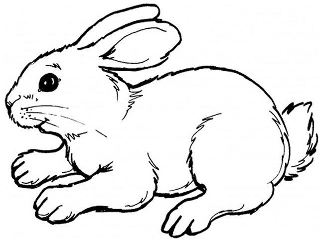 rabbit drawing outline - Boat.jeremyeaton.co