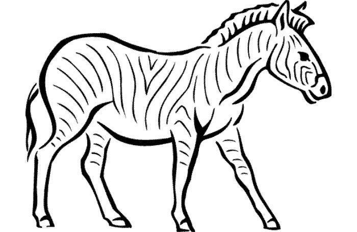 printable zebra coloring page