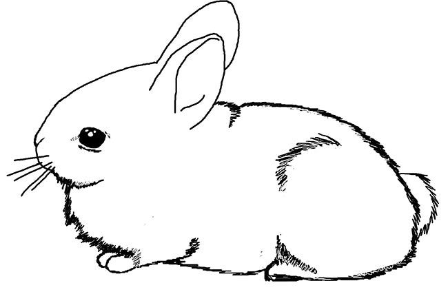60 Rabbit Shape Templates And Crafts Amp Colouring Pages