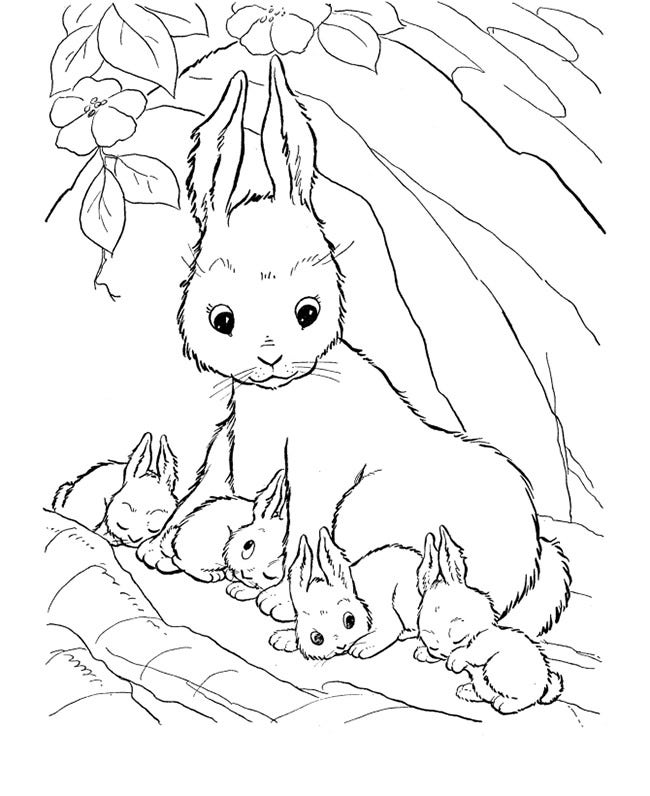 rabbit farm animal coloring page