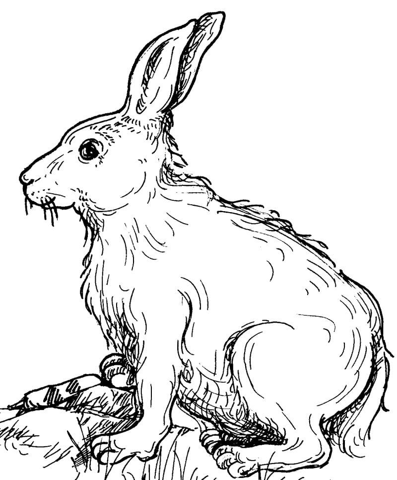 rabbit template sample