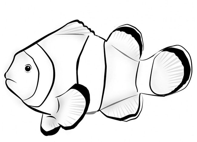 reef fish template