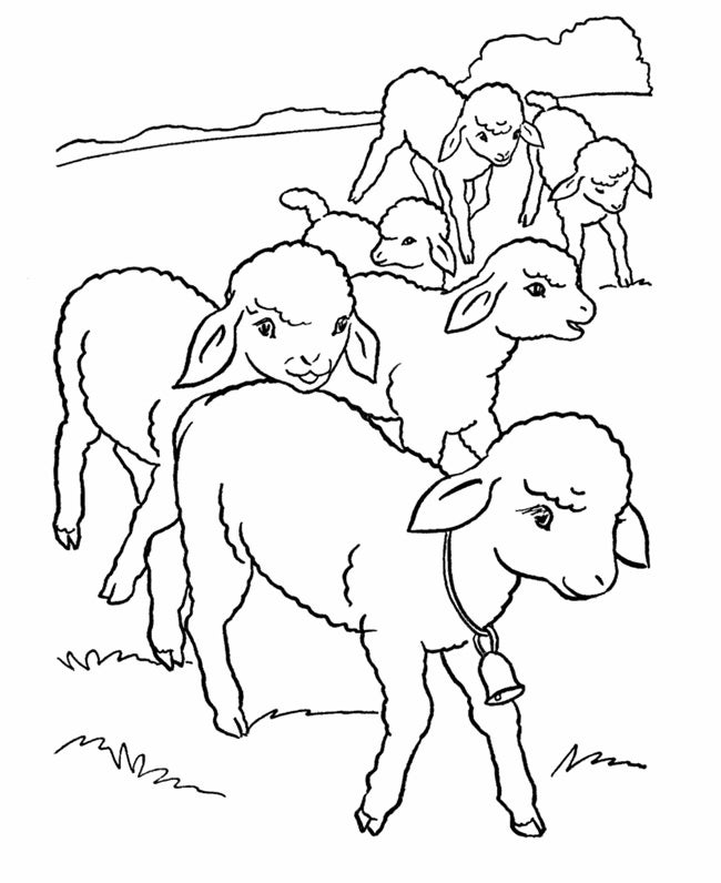 sheeps farm animal template