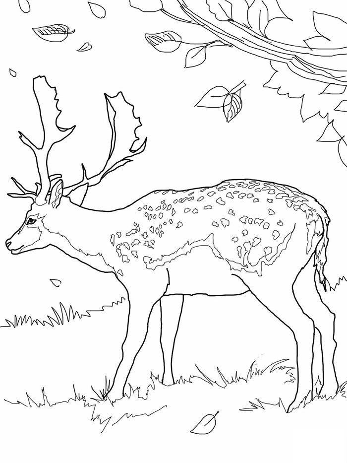 simple deer template