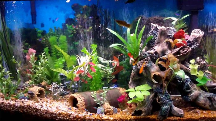 photograph regarding Fish Tank Background Printable named 50+ Easiest Aquarium Backgrounds Free of charge High quality Templates