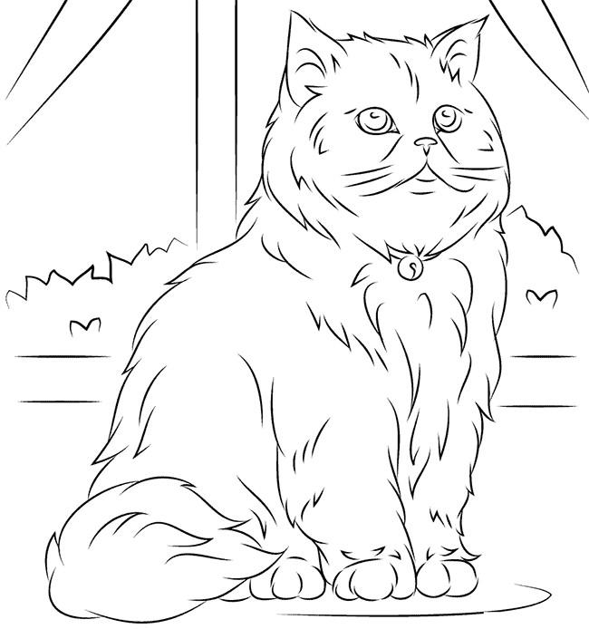sitting persian cat