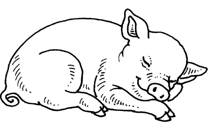 sleeping pig template