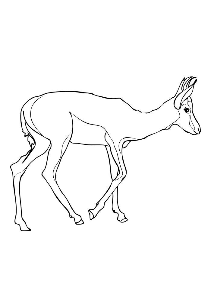 springbok coloring page