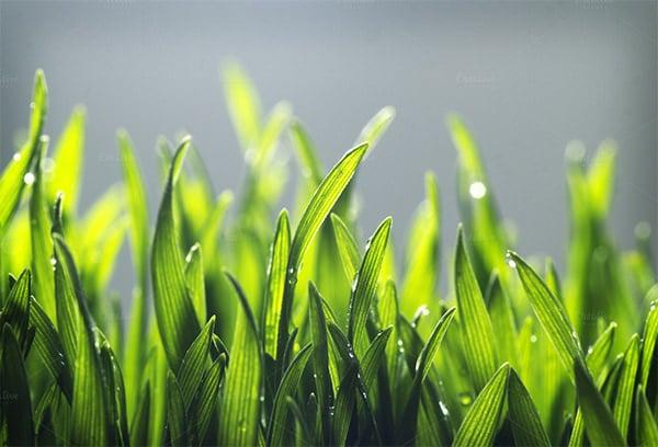 tiny grass background