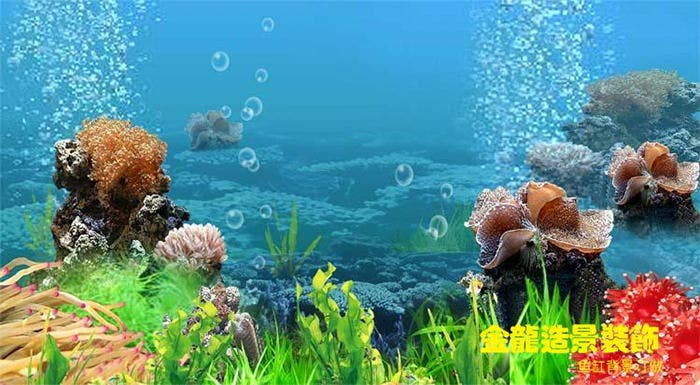 Unduh 470 Koleksi Background Untuk Aquarium HD Gratis