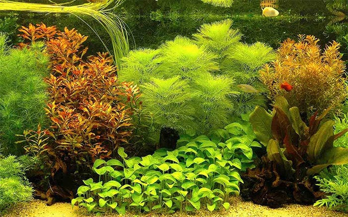 50 Best Aquarium Backgrounds To Download Amp Print Free Amp Premium Templates