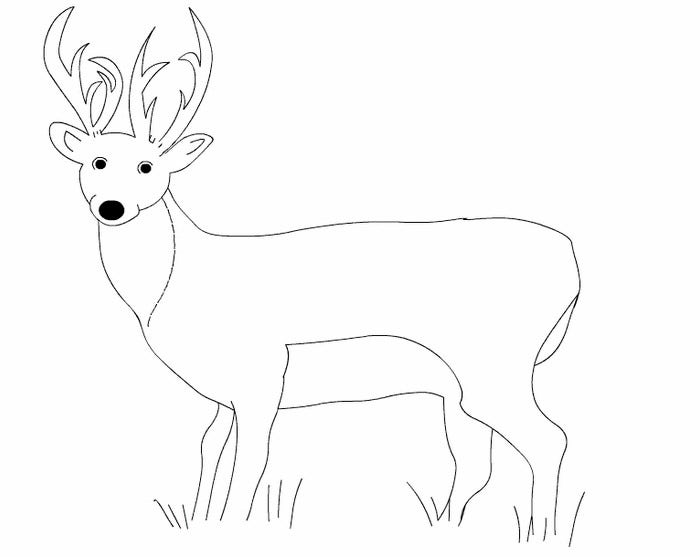 white tailed deer template