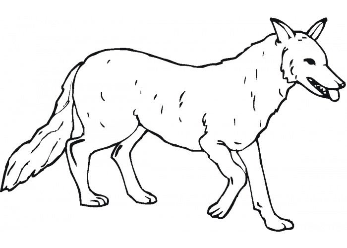 wolf crokky coloring page