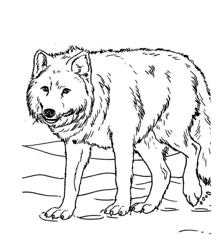wolf template animal templates free premium templates