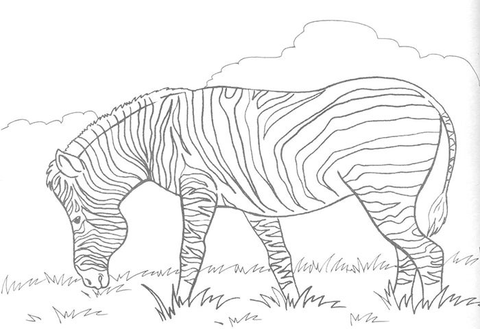 zebra template outline