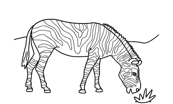 Zebra Template - Animal Templates