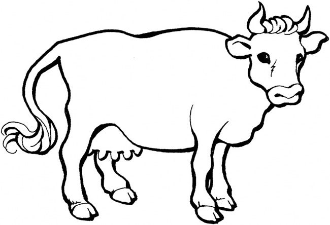 Line Drawing Cow Face : Cow template animal templates free premium