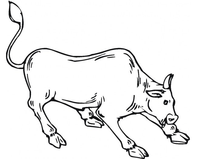 cow template 11