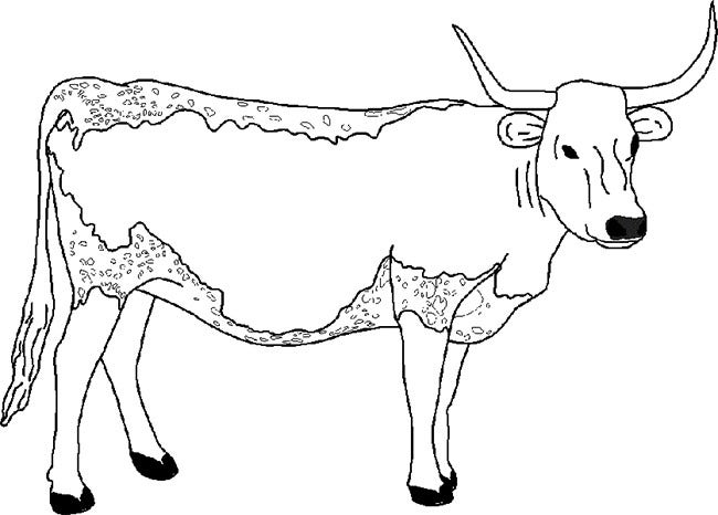 cow template 12