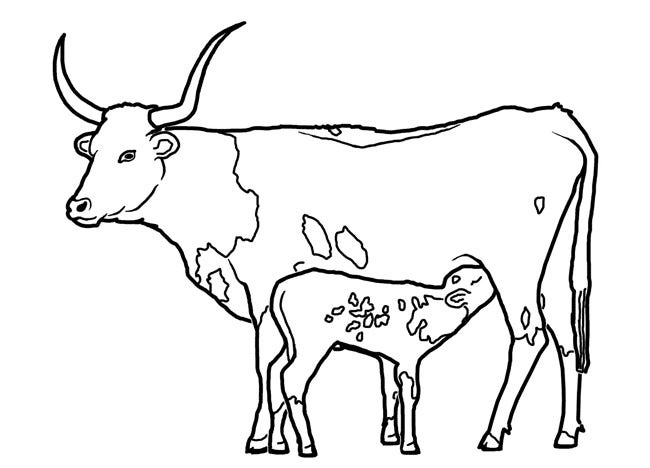 cow template 13