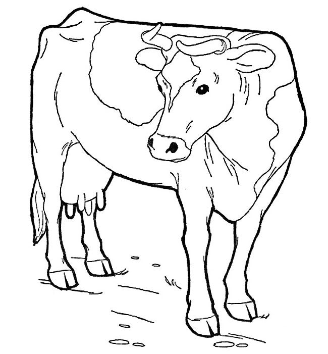 cow template 14