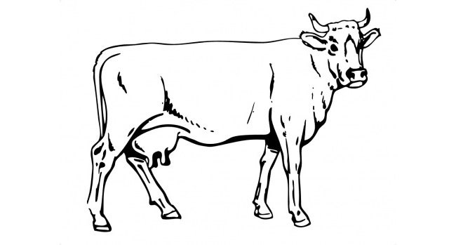 cow template 17