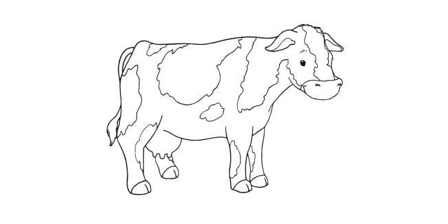 cow template 27