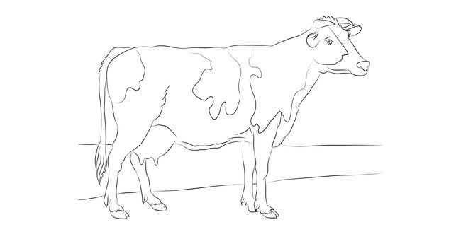 cow template 28