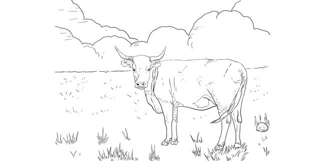 cow template 29
