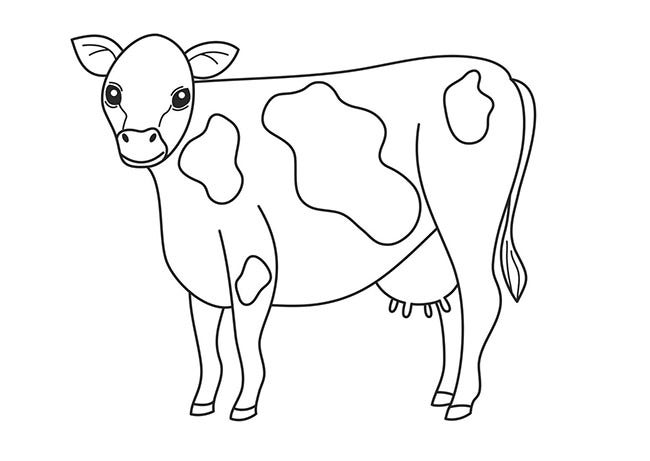 cow template animal templates free premium templates