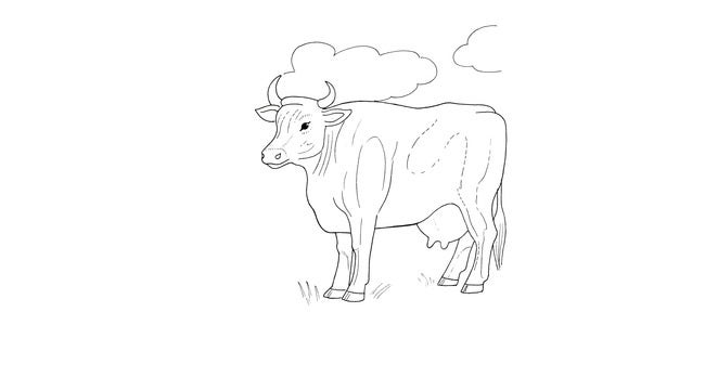 cow template 31
