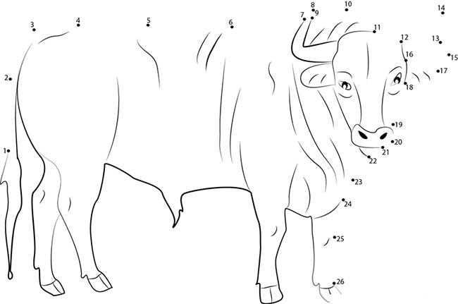 cow template 34