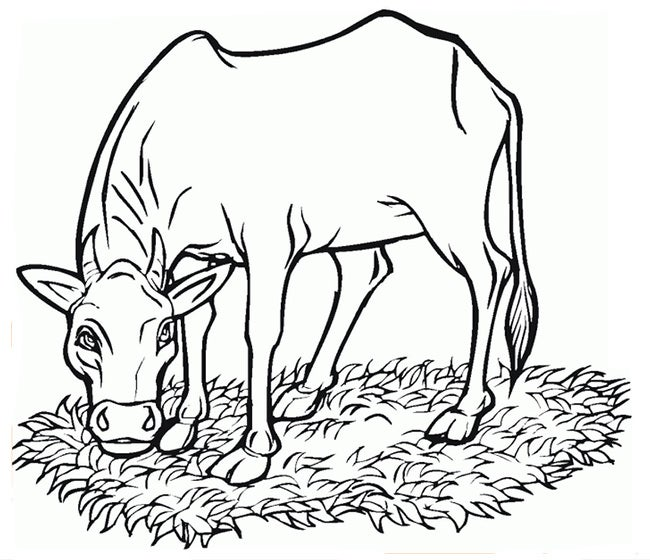 cow template 8