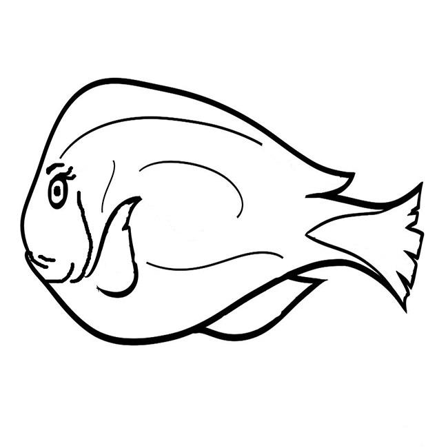 fish 5151