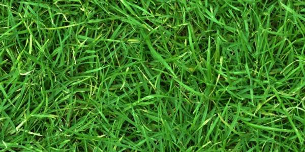 green grass texture3