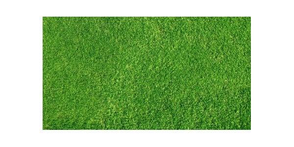 green grass22