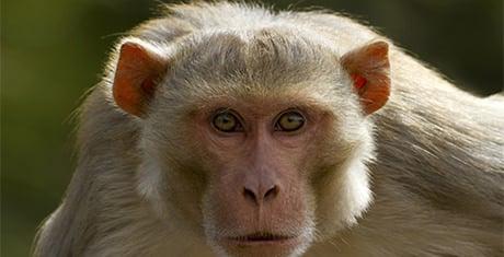 monkeytemplates