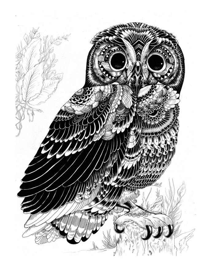 Owl artwork design