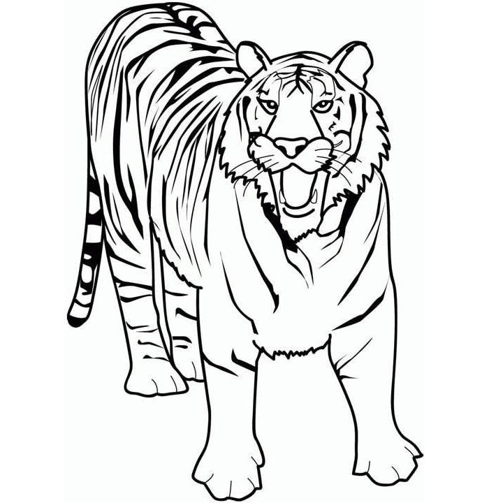 printable tiger template