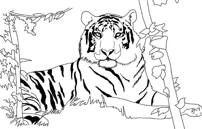 tiger template 18