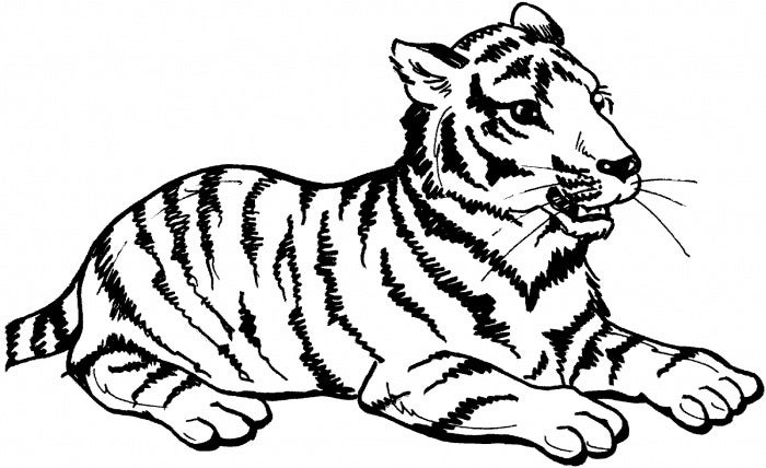Line Drawing Of A Tiger S Face : Tiger shape templates crafts colouring pages free