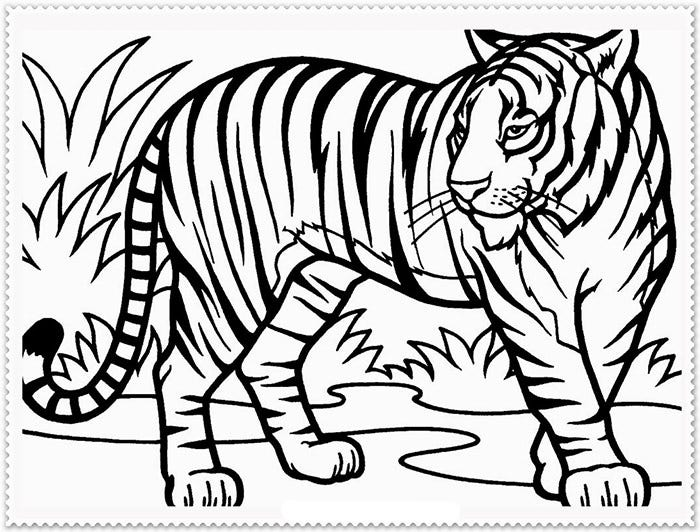 tiger template outline