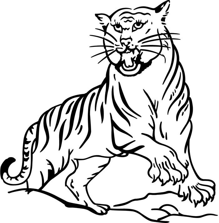 tiger template drawing