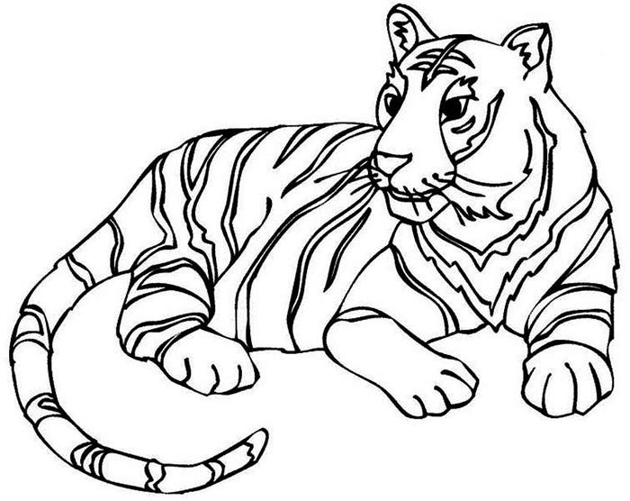 Tiger Template Kids Drawing