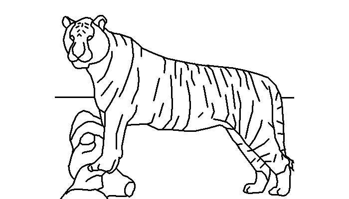 tiger template 43