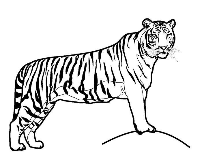 download - Animal Coloring Pictures To Print