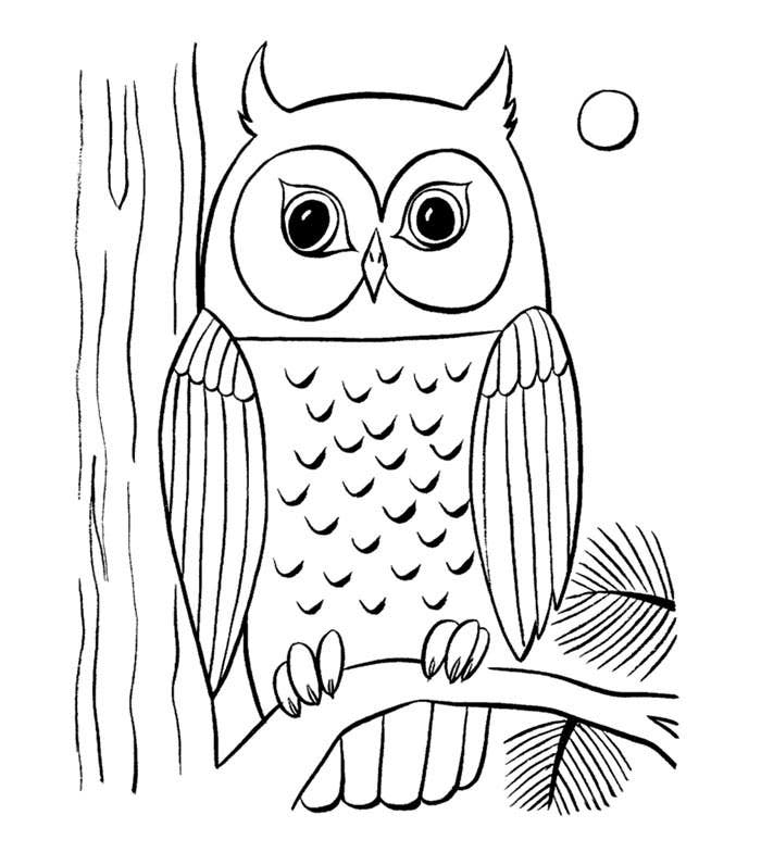 owl coloring page - Colouring Pages Print